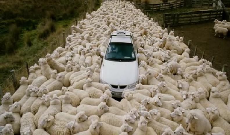 Black Sheep - Pecore Assassine