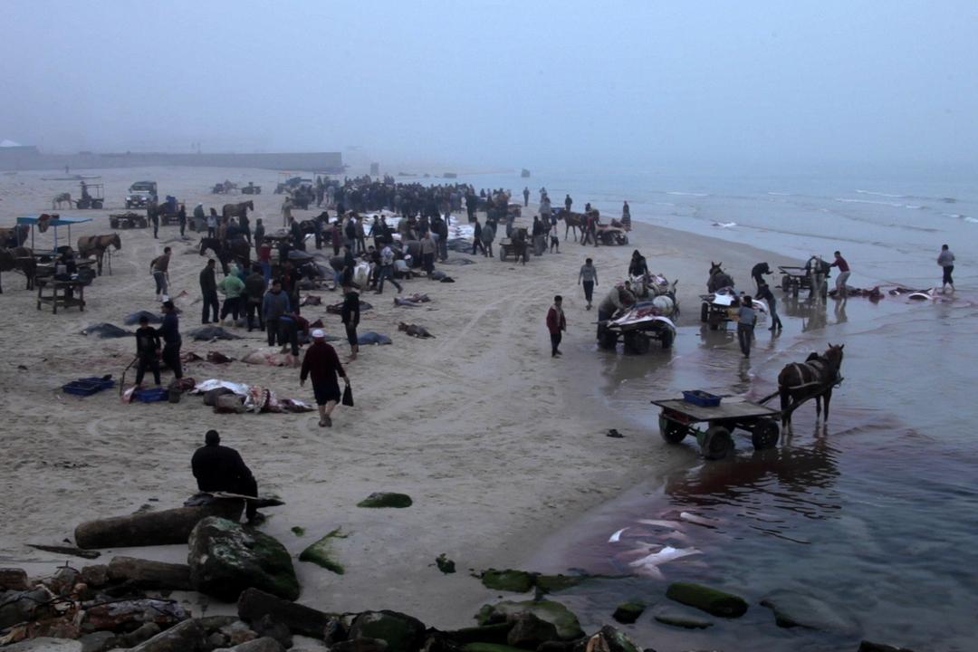 Striplife - A day in Gaza
